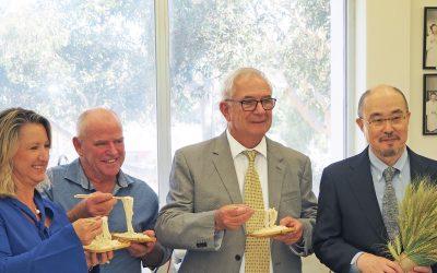 30 years of udon noodle sensory evaluation