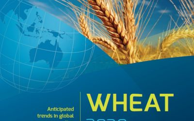 Wheat 2030: Anticipated trends in global consumption
