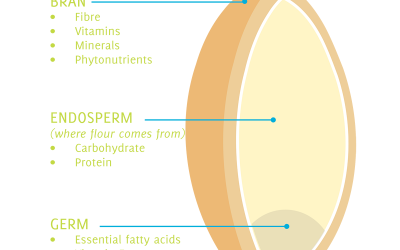 New AEGIC test to examine the truth of whole grains
