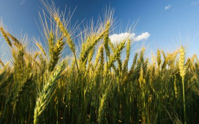 30 – Volatility in Australia's wheat export supply chains