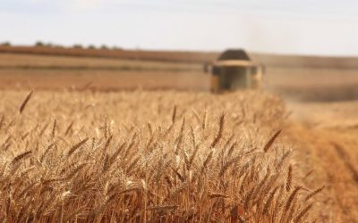 29 – Wheat Price Variability – A View From the West