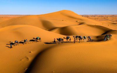 Horizons #48 – Saudi Arabia's love affair with barley – Part Two